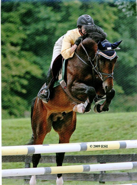 CadJenjumpweb  Greengate Stud German Horses For Sale  Warmblood