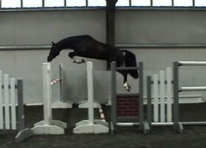 Donarweiss Jump Chute