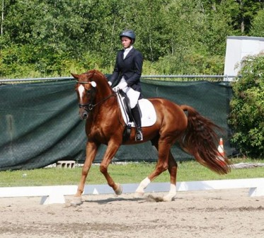 2014: Werbellin, VT Dressage Days