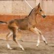 US Horses